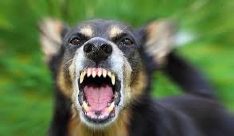 Femeie ajunsă la spital după ce a fost atacată de câinele vecinilor