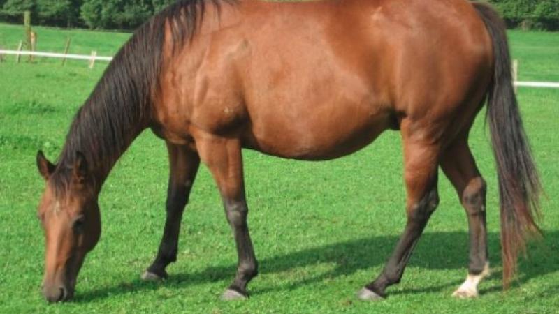 Femeie de 41 de ani, la spital după ce a fost crunt lovită de un cal!