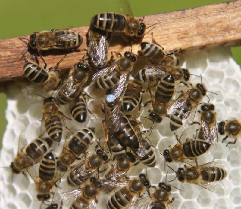 Femeie înţepată de zeci de albine!