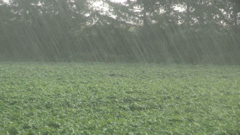 Fenomen periculos: Ploile torențial-acide afectează culturile agricole