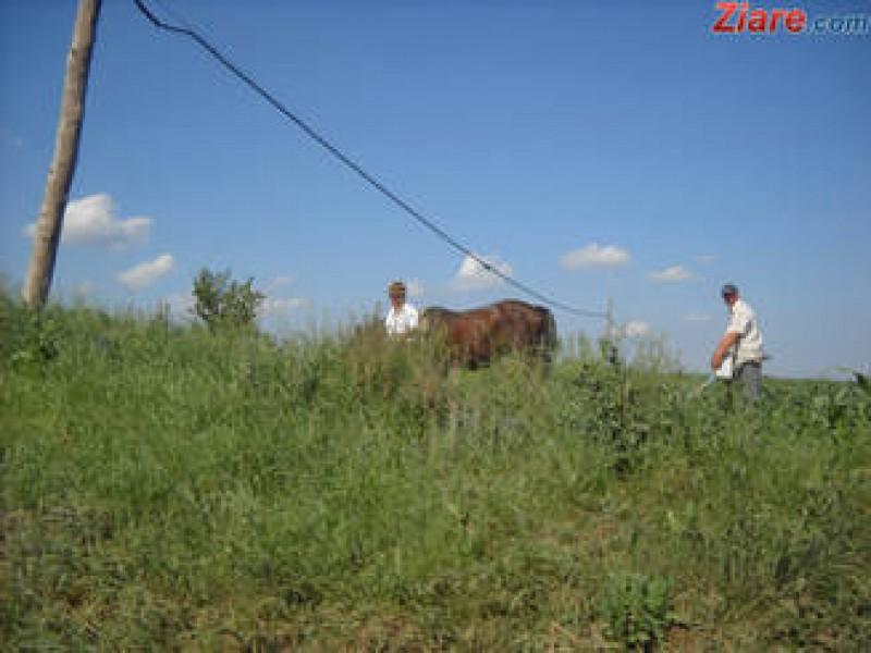 Fermierii se plang ca nu au forta de munca in agricultura, dar dam ajutoare de 10 miliarde de euro
