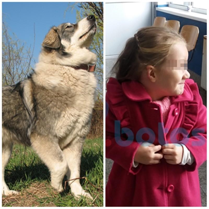 Fetiță mutilată de câinele vecinilor. Stăpânii câinelui nu au nicio vină, spun magistrații! FOTO- VIDEO