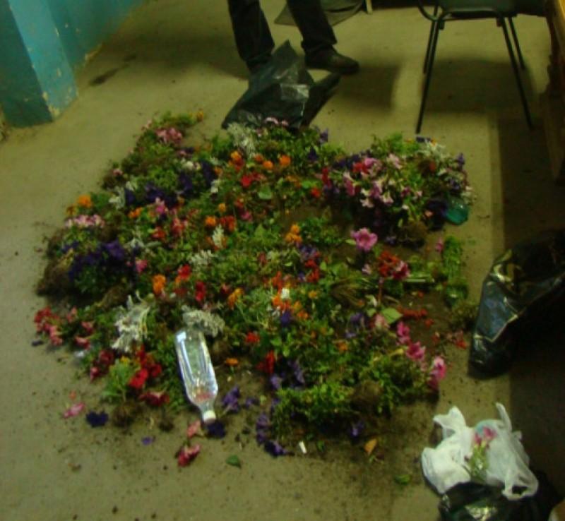 Flori rupte de pe Pietonalul Unirii de mai mulți tineri de etnie romă