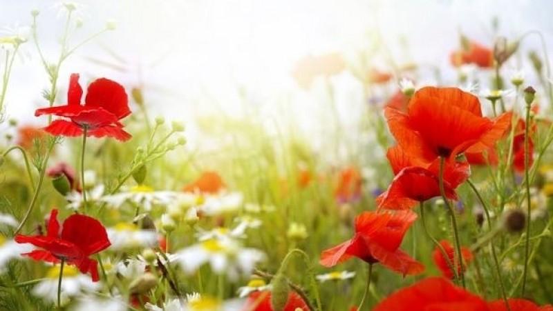 Florile, culorile şi sănătatea. Câteva sfaturi de urmat atunci când oferim flori