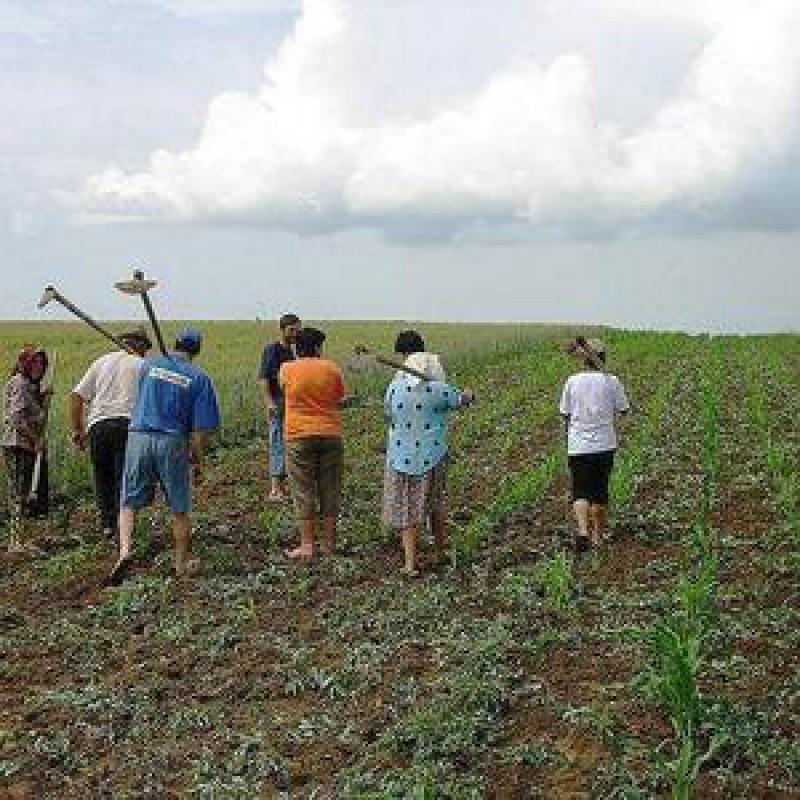 Fond pe pensii pentru agricultori din 2010