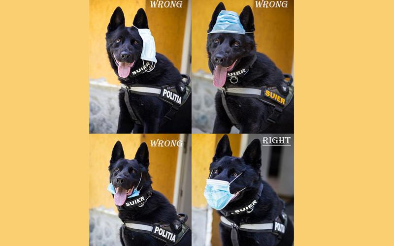Fotografia zilei: Câinele polițist Şuier arată cum se pune corect masca de protecție