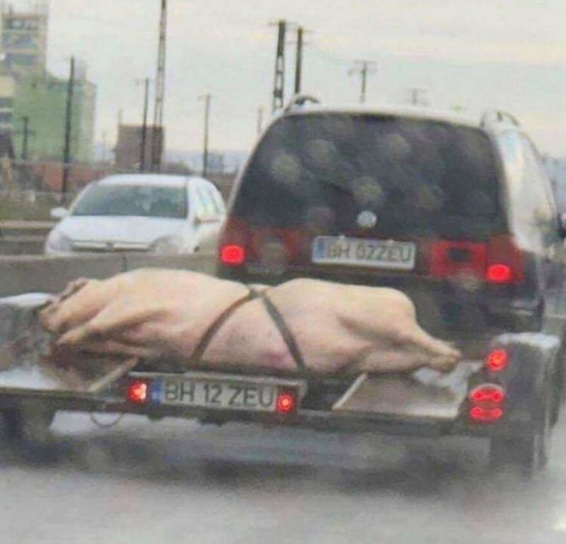 Fotografia zilei: Chiar suntem cei mai inventivi când vine vorba de transportat porcii pentru Crăciun!