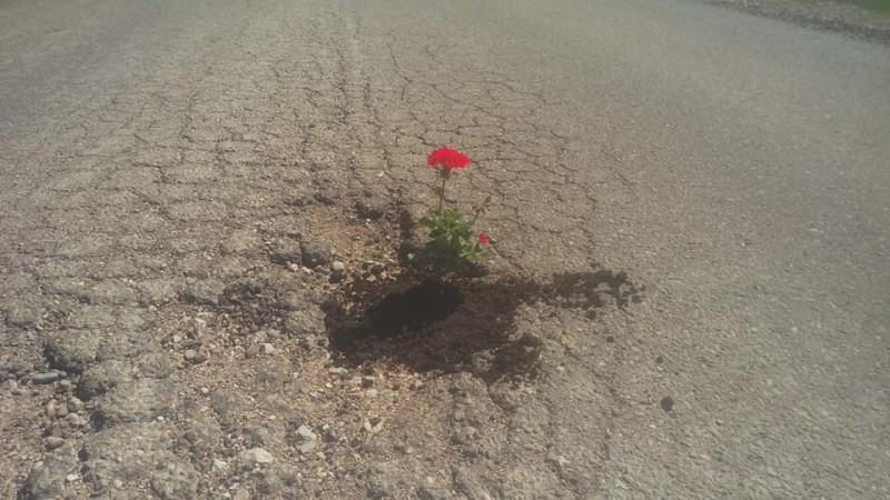 Fotografia zilei: La Botoșani înflorește asfaltul!