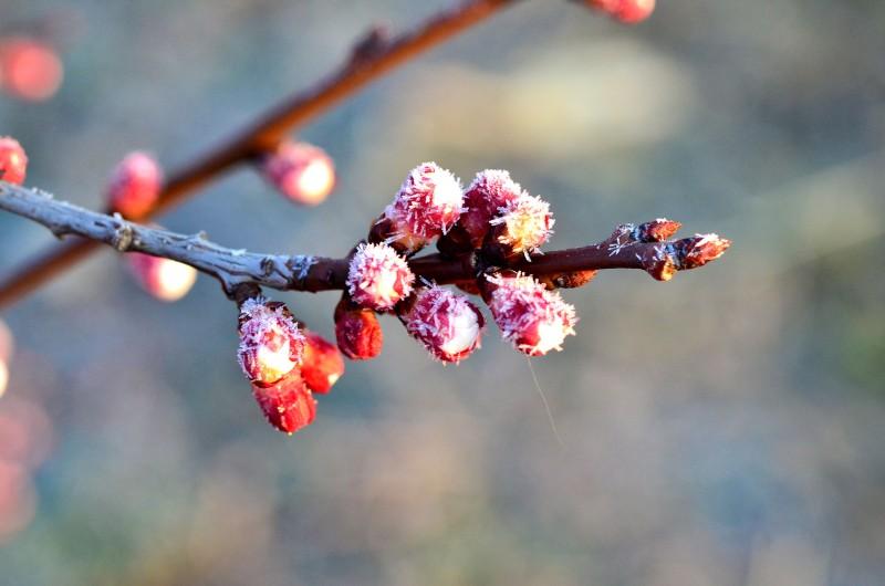 Temperaturile de iarnă pun în pericol culturile agricole!