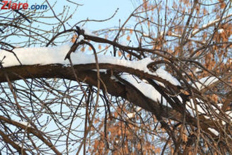 Frig în toată țara, temperaturi sub zero grade la Botoșani!