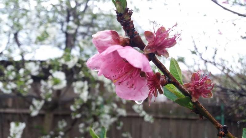 Frig și ploi: Vremea capricioasă continuă