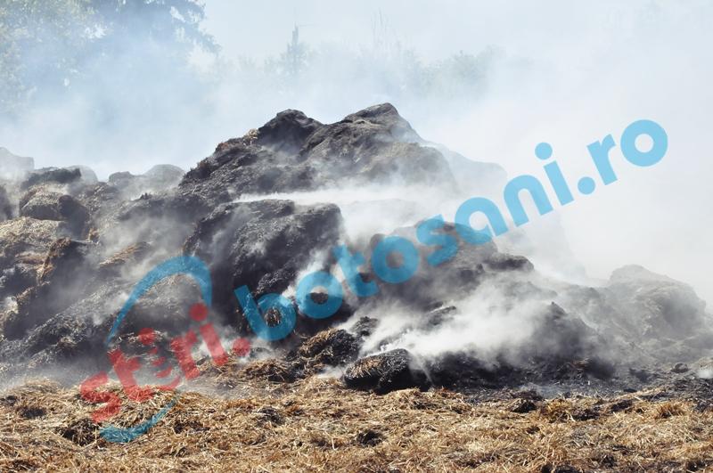 Furaje incendiate în timp ce proprietarul pârlea porcul!