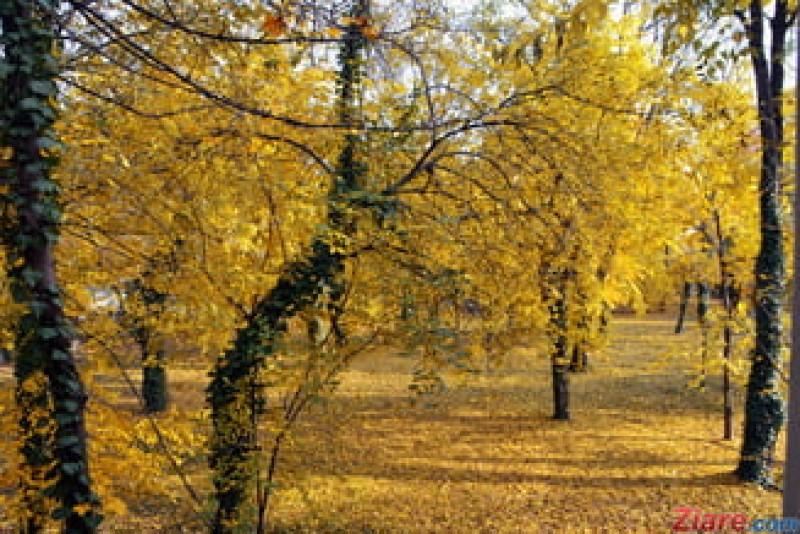 Garda de Mediu: Câte 100 de arbori vor fi plantați în fiecare județ pentru marcarea Centenarului