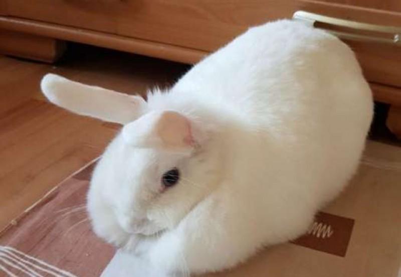 Ghinion incredibil pentru o familie care avea un iepure ca animal de companie