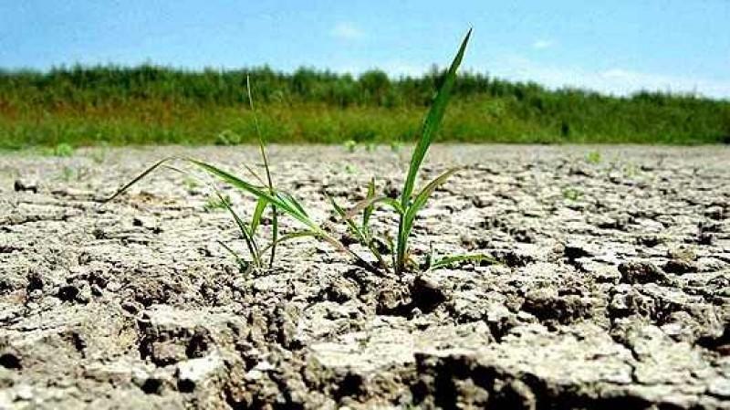 Guvernul a solicitat date privind gradul de afectare a culturilor din Botoşani
