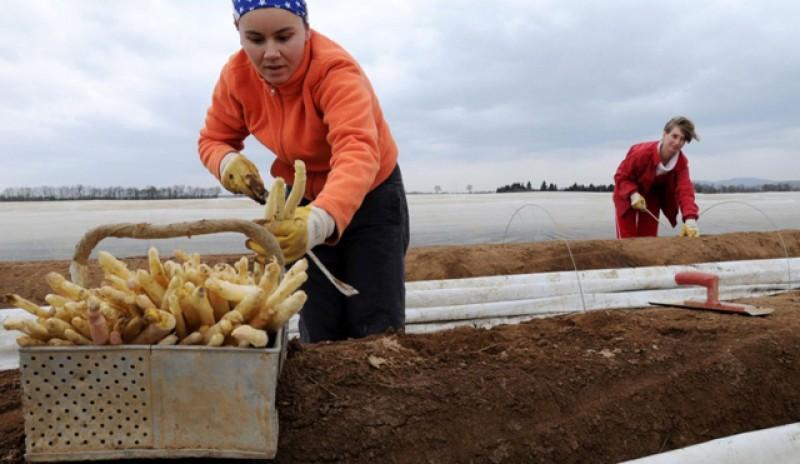 Huliți și condamnați, românii care au plecat în străinătate au trimis anul trecut în țara peste 7 miliarde de dolari. Suma este egală cu salariile bugetarilor pe 4 luni