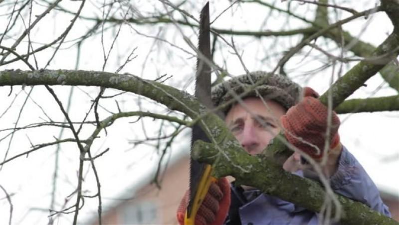 Iarna în livadă. Care sunt tăierile importante ce trebuie făcute pomilor în anotimpul rece!