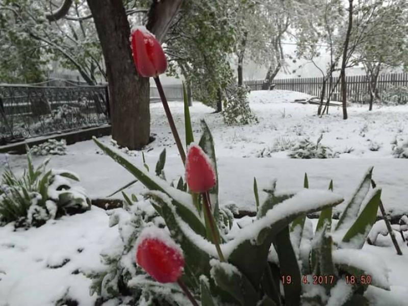 Iarnă în toată regula în județul Botoșani! FOTO