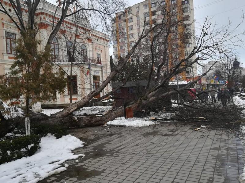 Imaginea zilei: Copac prăbușit pe Pietonalul Unirii!