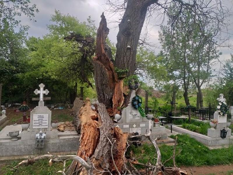 Imaginea zilei, în Cimitirul Eternitatea: Și copacii mor!