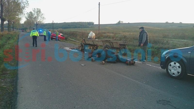 Impact între o maşină şi o căruţă pe un drum din judeţ! Cal în agonie pe asfalt! FOTO