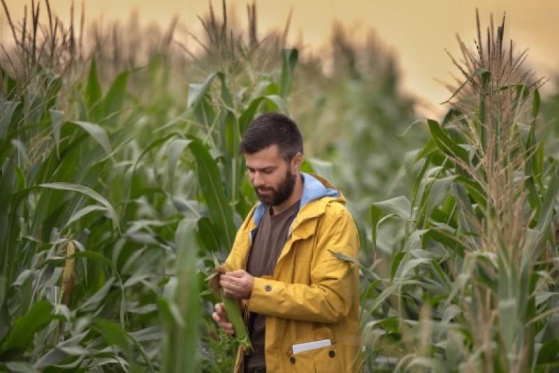 IMPORTANT! Ce condiții sunt cruciale pentru ca un business agricol să fie profitabil!