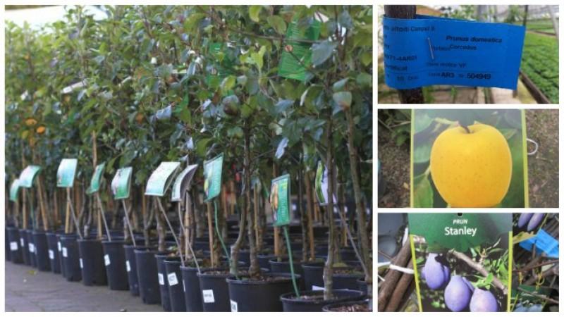 IMPORTANT! Cum alegem pomii fructiferi pentru plantările de primăvară!