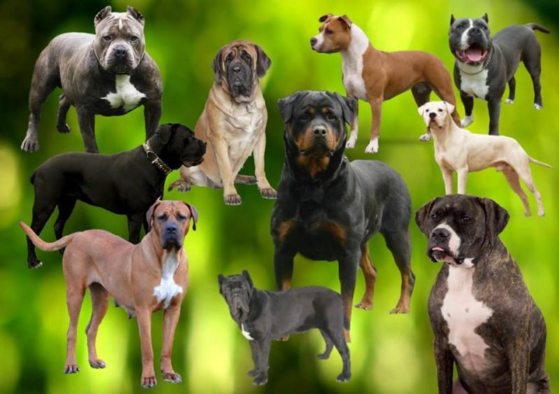 IMPORTANT: Deții un câine periculos ori agresiv? Iată ce obligații ai!