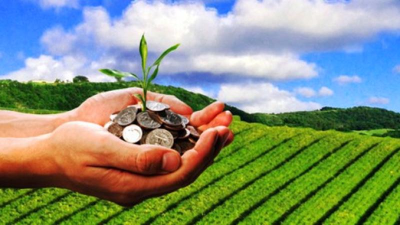 Impozite în agricultură 2019. Anunțul urgent de la ANAF pentru fermieri