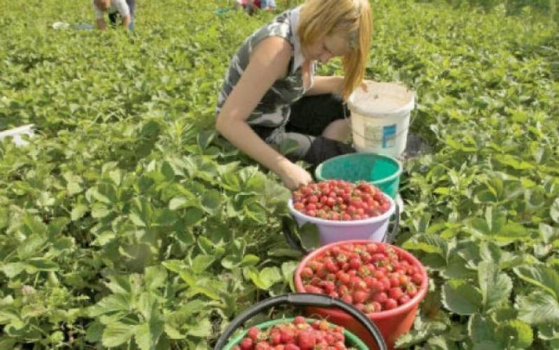 În atenția botoșănenilor: Locuri de muncă sezonieră în agricultură, în Spania, campania 2018!