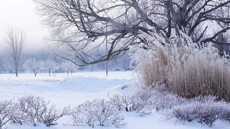 În sfârșit, vom avea temperaturi de iarnă. Gerul se instalează în toată regiunea