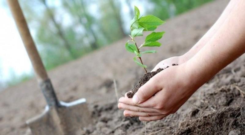 """Încă o sesiune de depunere a cererilor pentru """"Sprijin pentru prima împădurire şi crearea de suprafeţe împădurite""""!"""