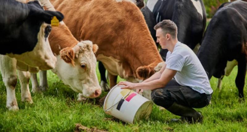 Începe autorizarea la plată a subvențiilor la vaci cu lapte, taurine din rase de carne, bivolițe și viermi de mătase