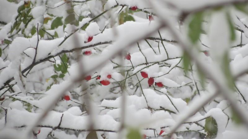 Informare meteo de ninsori, vânt și polei în toată țara