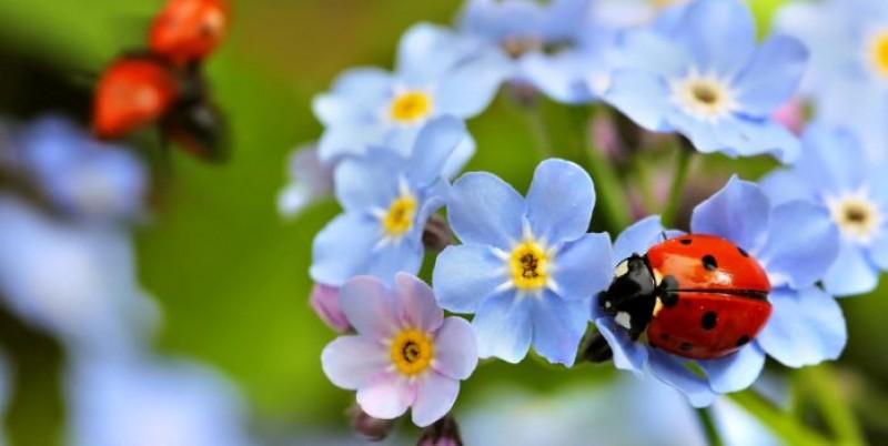 Insecte benefice pentru plante!