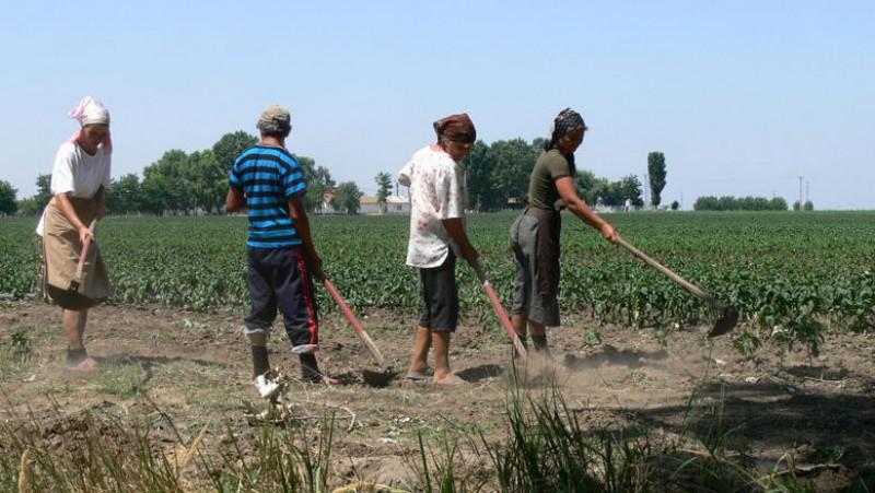 Inspecția Muncii a verificat zilierii din Botoșani și angajatorii acestora. Nu a fost aplicată nicio sancțiune