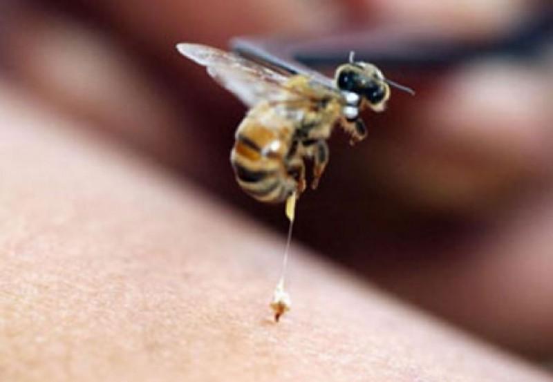 Înțepat de o albină, a sunat la 112 pentru ajutor!