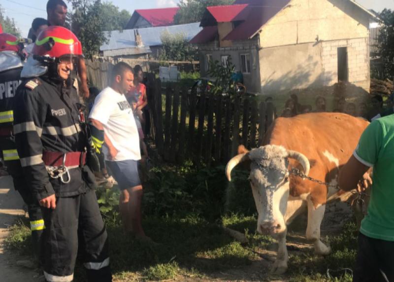 """Intervenţie cu """"greutate"""" a pompierilor din Dorohoi"""