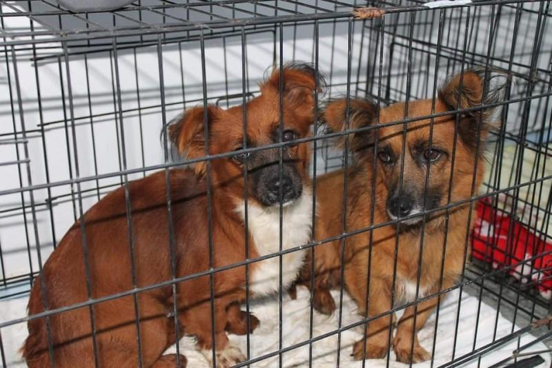"""INTERVIU. Medicul veterinar botoșănean care a reușit să salveze de la moarte mii de animale: """"Priviți adânc în ochii lor și nu uitați că există un Dumnezeu!"""""""