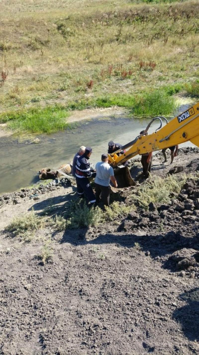 Bovină salvată de pompieri din râul Jijia cu ajutorul unui buldoexcavator