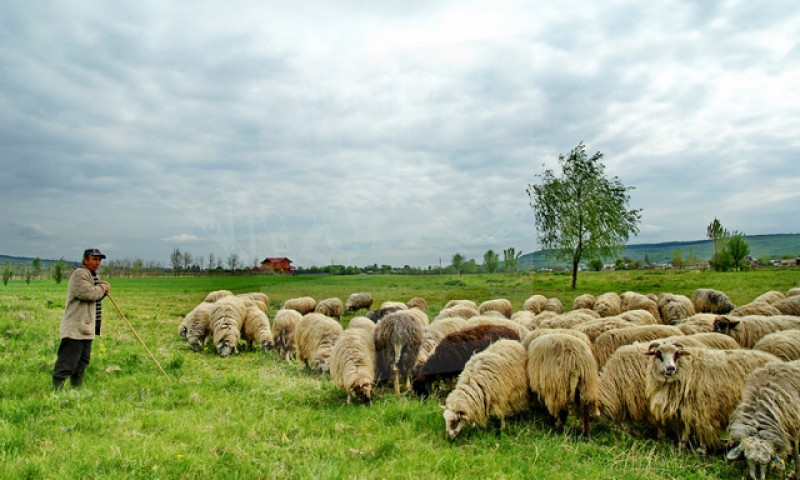 ISU a dispus evacuarea mai multor stâni și animale de la Baranca. Prutul a depășit cota de inundație