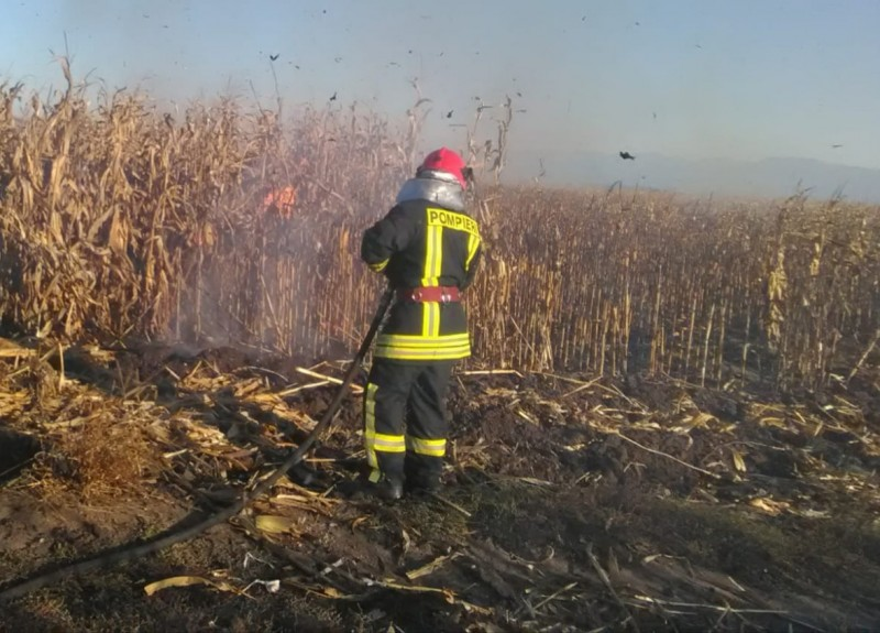 Lan de porumb cuprins de flăcări, după ce un adăpost de animale a luat foc