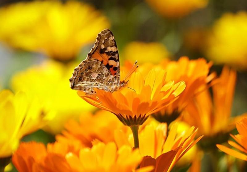 Lecții învățate la școala vieții. Fluturele care nu poate zbura nu cunoaște frumusețea vieții