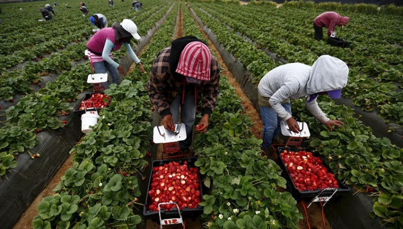 Locuri de muncă sezonieră în agricultură, în Spania