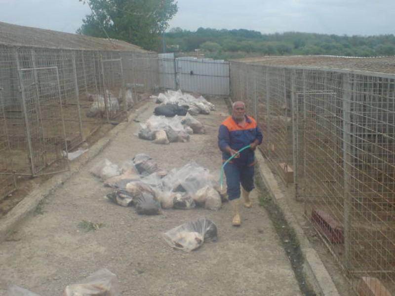 Macel la padocul de caini! Angajatii au atacat jurnalistii cu caramizi! - FOTO