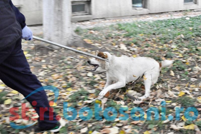 """Maidanezii de pe străzile din Botoșani încing din nou spiritele! """"Nu eu am declarat că mai sunt doi câini în Botoșani"""""""