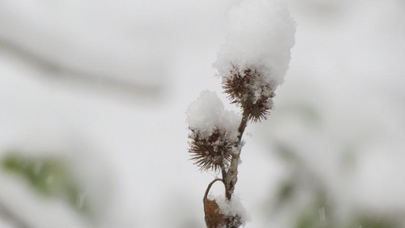 Meteo: Cod galben de ceață și polei dimineață, ploi și ninsori. La Botoșani, temperaturi negative de până la minus 15 grade