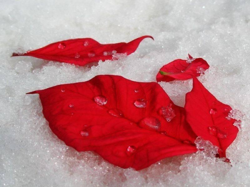 Meteo: Iarna si-a intrat in drepturi. Început de săptămână cu zero grade la Botoșani!