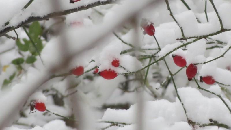 Meteo: Ninsori și frig în toată țara. În Botoșani, gerul se întețește