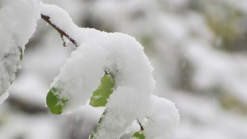 Meteo: Nu scăpăm de ninsori, lapoviță și polei. Câte grade vom avea în weekend la Botoșani!